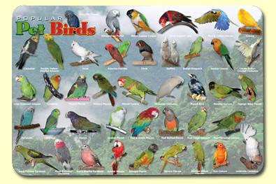 Popular Pet Birds Placemat
